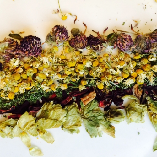 from the top: red clover, chamomile, skullcap, hibiscus, hops