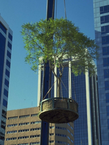 Darling Harbour tree move.jpg