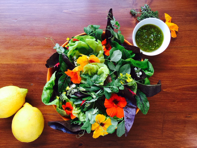 Spring salad with pea tendril, nasturtium, and a lemon thyme and lemon dressing.