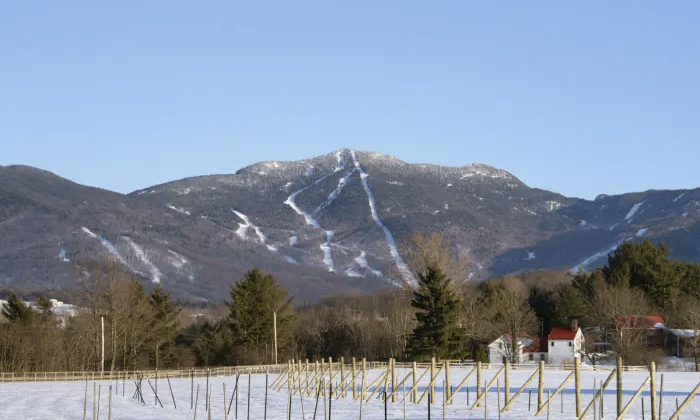 From article in SKI Magazine as shot of the vineyard Stowe Winery and  Stowe Wedding Venue  The Barn at Smugglers' Notch. .  Photo Credit: Brian Mohr // Ember Photo