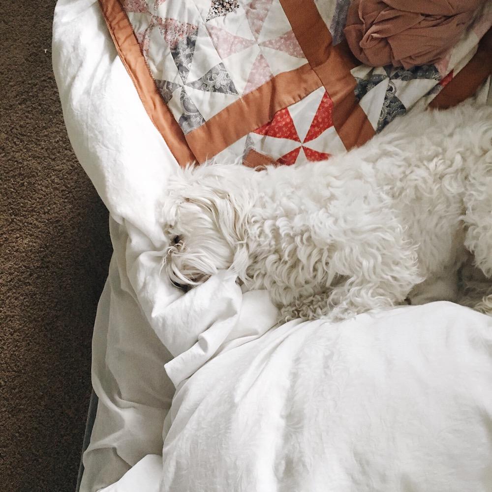 sleeping-finny-boy.jpg