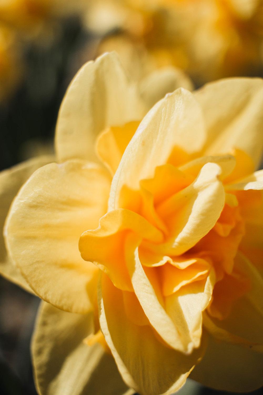 abbotsford-tulip-festival_04