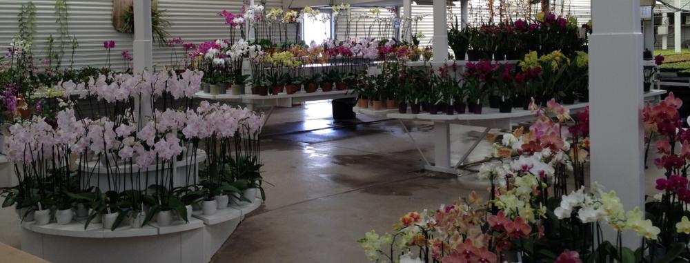 orchid fest.jpg