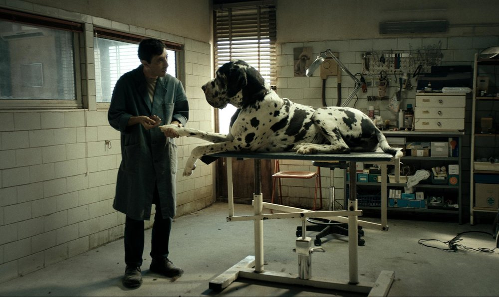 Best Actor winner Marcello Fonte in  Dogman