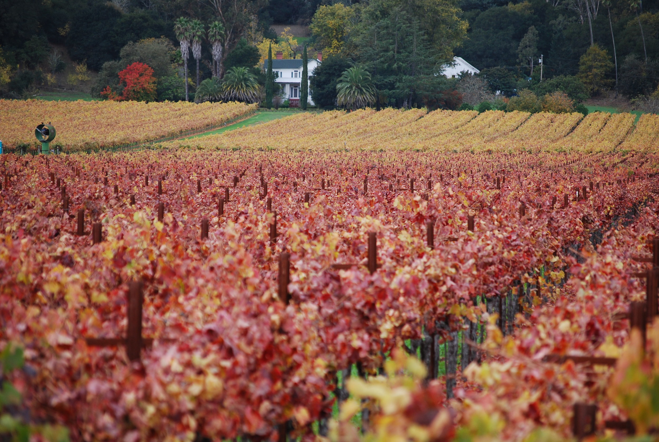 Yountville fall