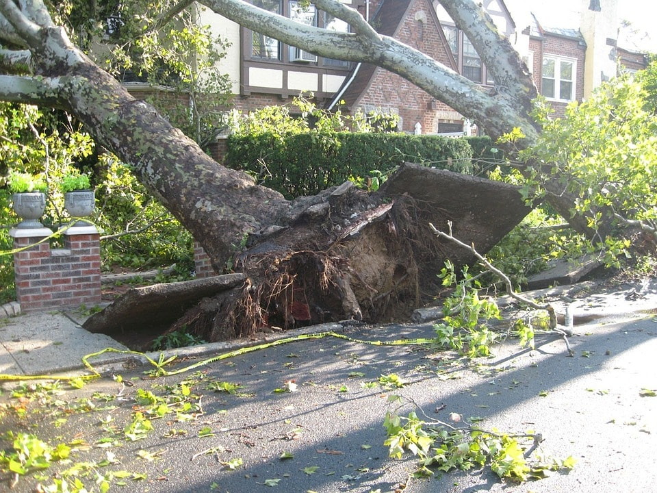 tree-14340_960_720-min.jpg