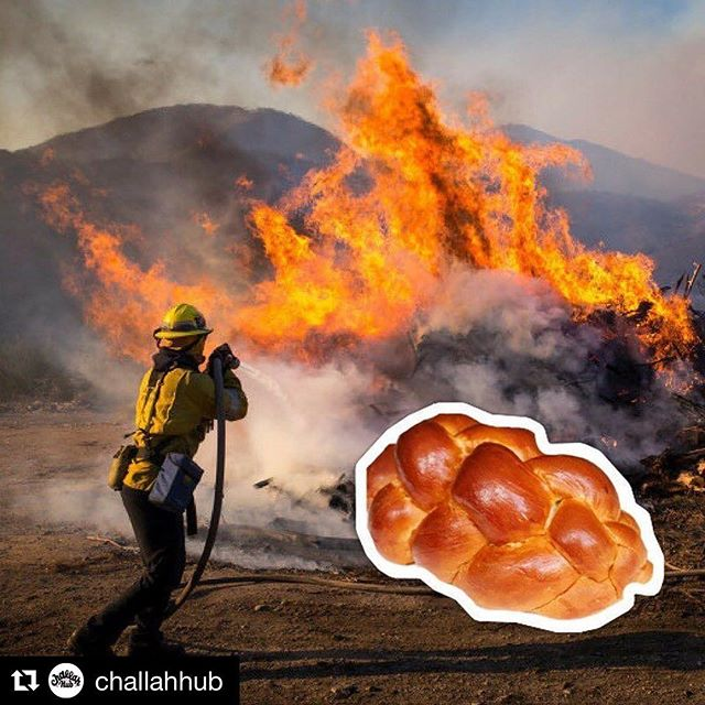 "Challah Hub & Indie Jams will be delivering ""Hero's Challah"" and Jam to fire stations all around LA tomorrow. If you would like to donate challah or a jar of Jam, let us know and we will deliver it for you!  #Repost @challahhub (@get_repost) ・・・ We saw a group of firemen napping under a tree in front of a blackened hillside, and were overcome with gratitude. While all of us in #LA have been switching from contacts to glasses and pulling our shirts over our mouths when we walk outside, these incredible heroes have been running towards the flames, working in some seriously terrifying conditions to keep us safe and healthy.  #Hanukkah is about miracles. We tell stories about how a small army defeated a much larger one, and we tell stories of persistence - rebuilding after each destruction.  Buy a #challah for a fireman, and we'll deliver them to all the stations we possibly can, along with a personal note of thanks.  #TheCreekfire scorched 15,619 acres of land, and after many sleepless days, is 95 percent contained as of this morning. Go #LAFD, GO!"