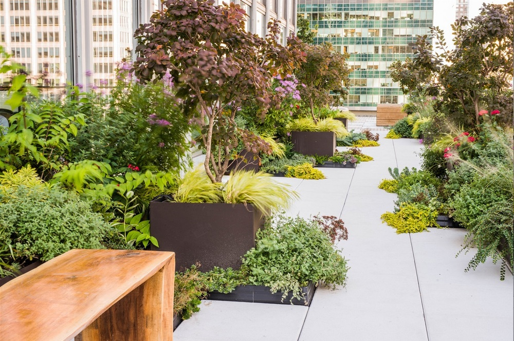 Flourishing plants on the large roof-like terrace of our Park Ave Commercial project designed and built by ECLLD.