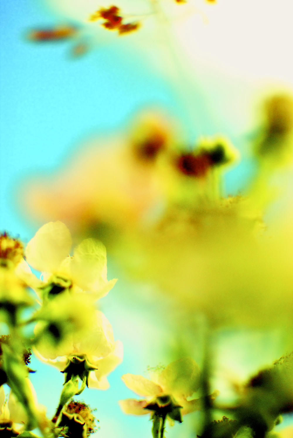 Blurred Yellow Rose.jpg