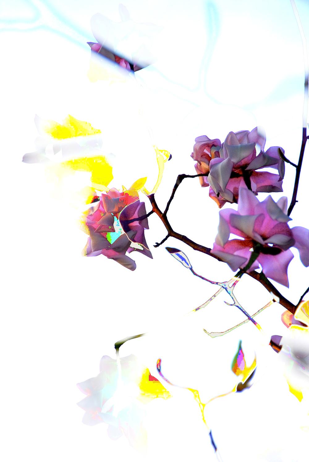 Magnolia Pixel.jpg