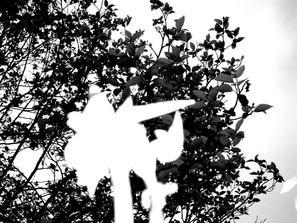 B&W Irises #2 fianl.jpg