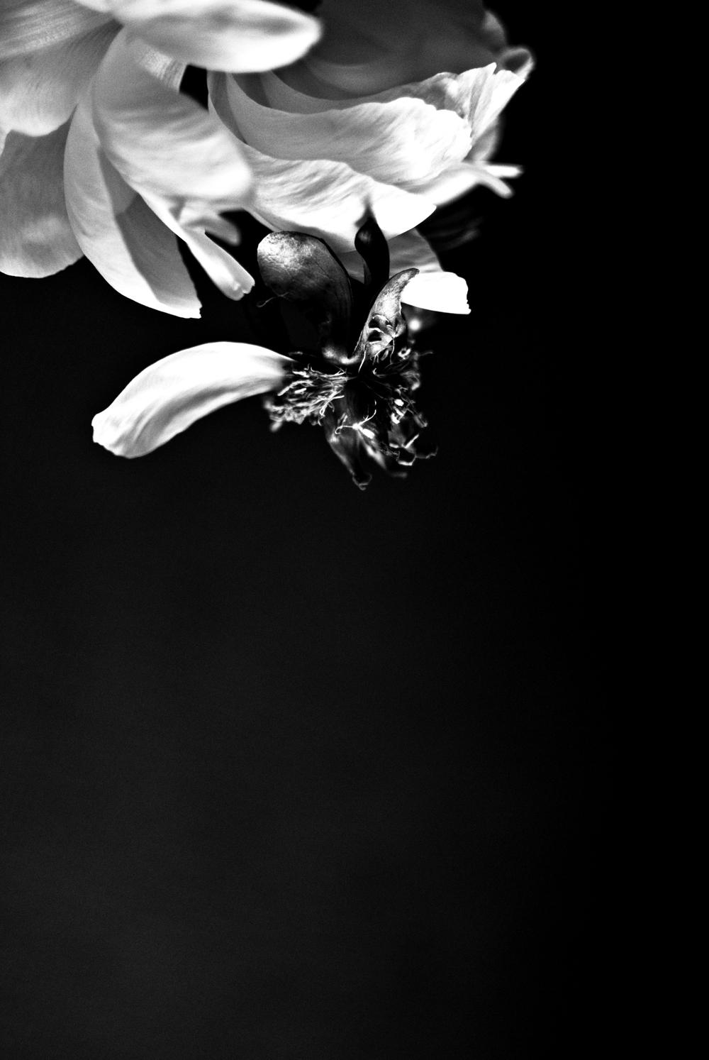 bw flower2.jpg