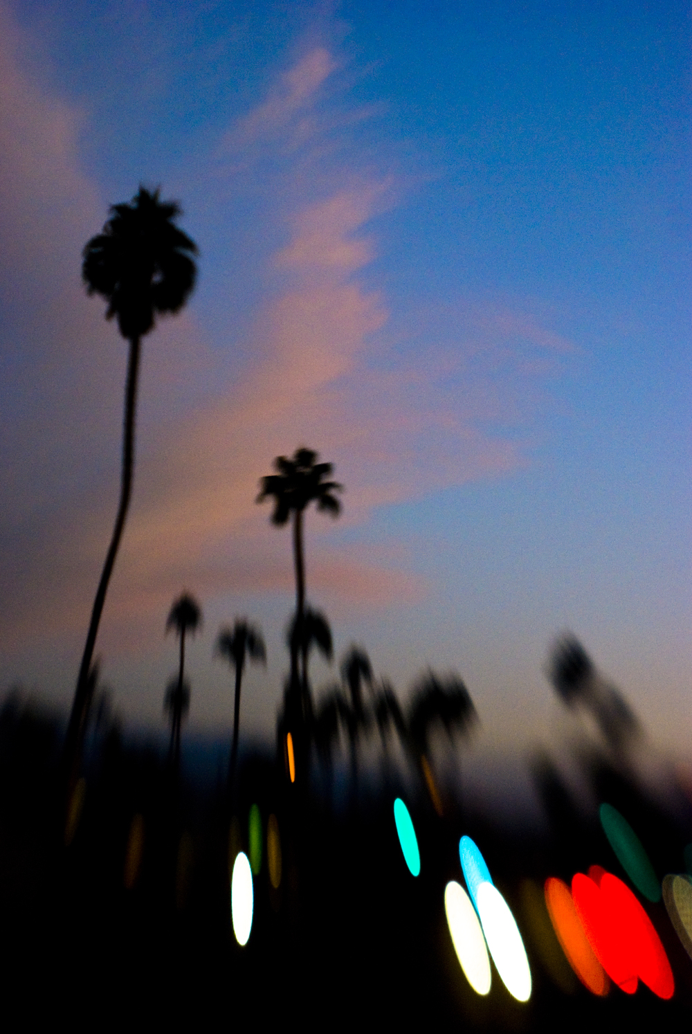 night palms.jpg