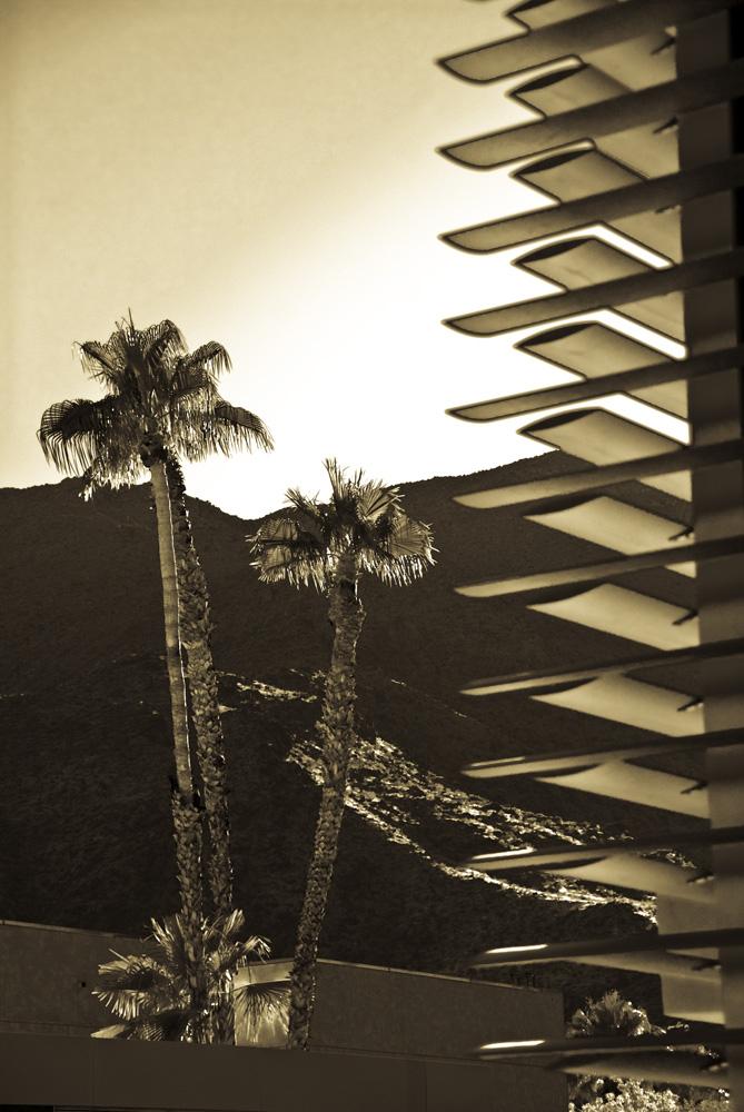 sepia palms.jpg