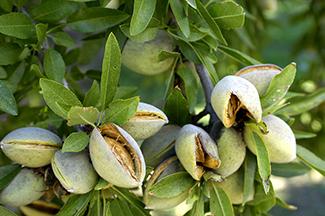 Summit_Premium_Nuts_Blossom_Bee_web.jpg