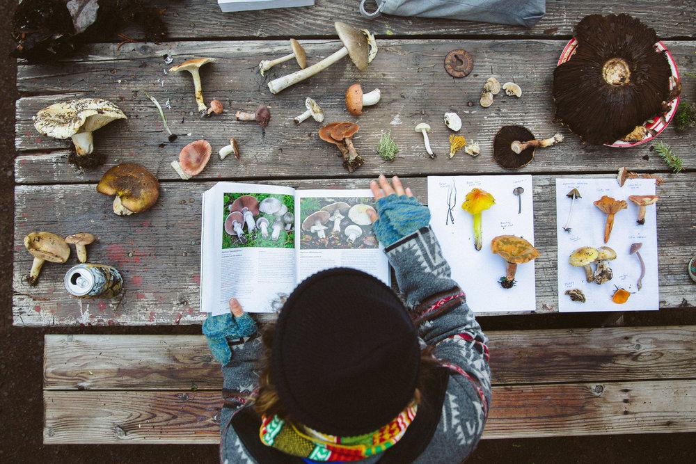Camp Navarro_Foraged Mushrooms on Table_Photo Credit Colin McCarthy.jpg