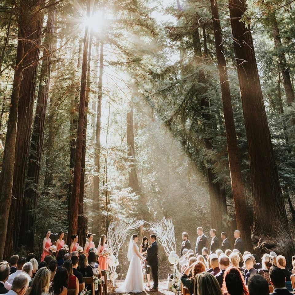 Ceremony in the Forest.jpg