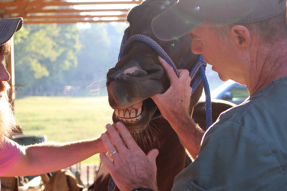 A class held at BWFA headquarters involving the study, diagnosis, prevention, and treatment of diseases, disorders and conditions of the oral cavity in a horse.