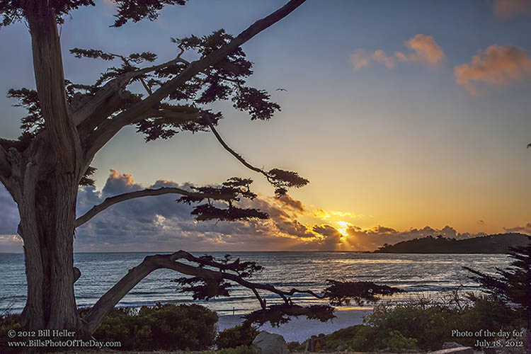 Cypress-on-the-beach-in-Carmel-by-the-Sea-California-by-Bill-Heller.jpg