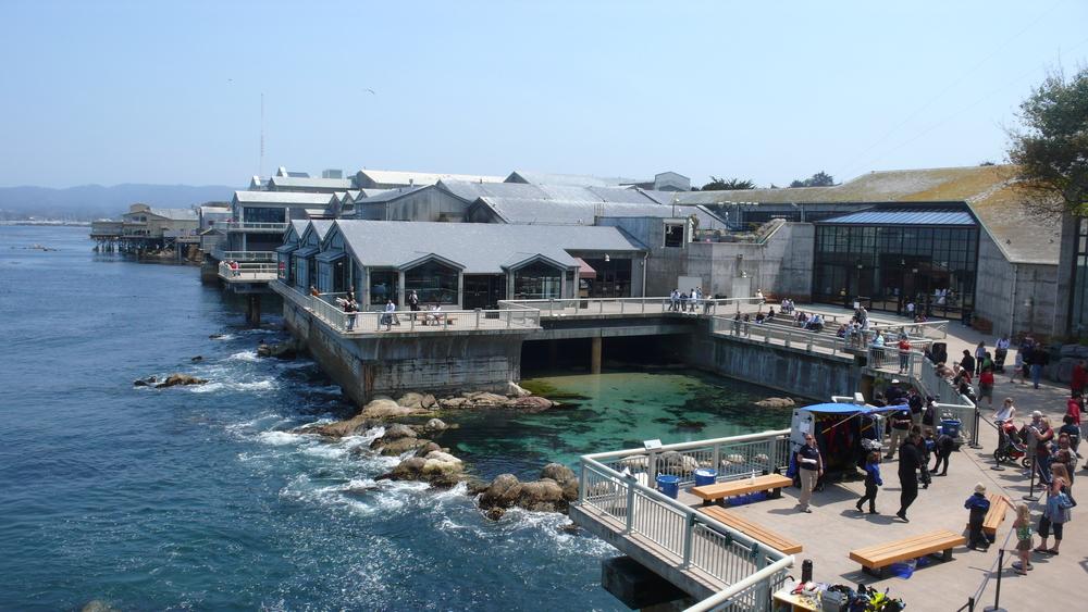 MontereyBayAquariumBackview.jpg