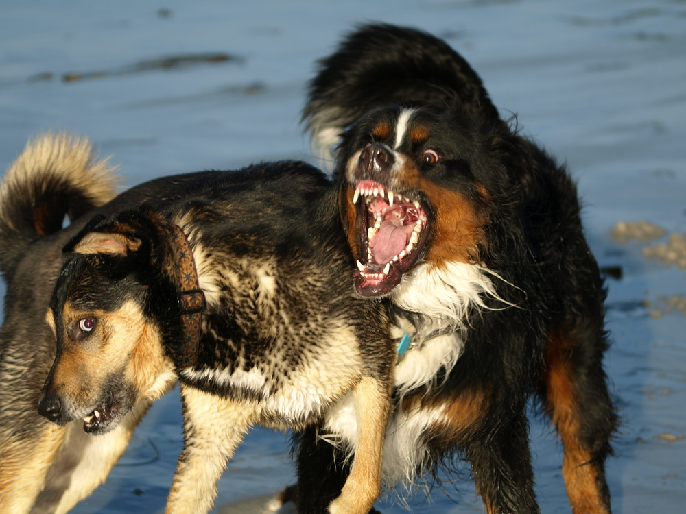 Moose and Joe Carmel Big Mouth.JPG