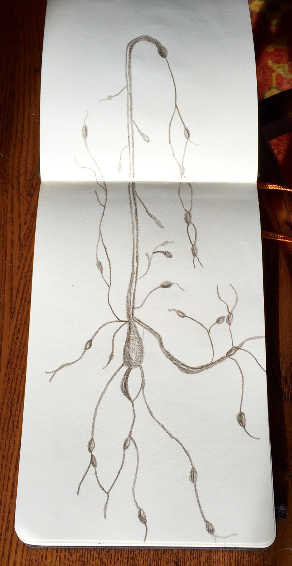 """Lymphatic"" Pencil & Ink"