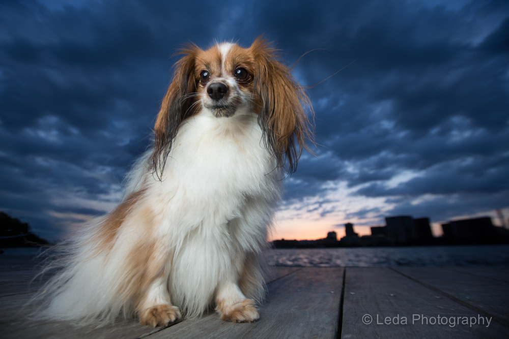 New_york_dog_photographer_2