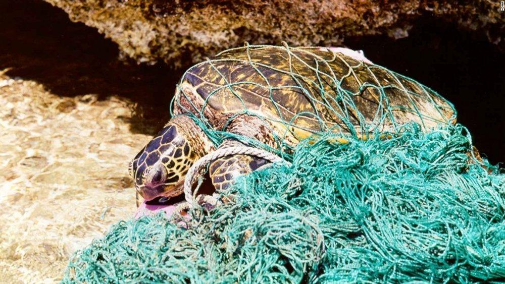 160628184748-plastic-turtle-2-super-169.jpg
