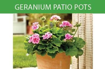 Geranium Patio Pots 2018