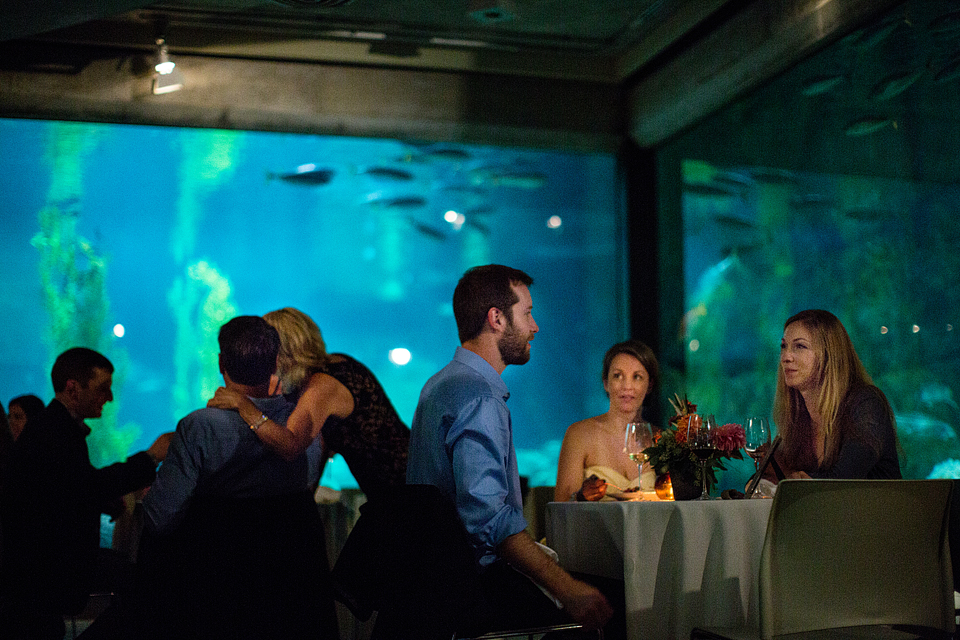 034wedding_photographer_aquarium_Lovelace_044.jpg