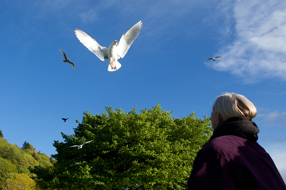A seagull calls for a woman's attention as she threw bits of bread in the air at Golden Gardens in Seattle, WA on Thursday, April 24, 2014.