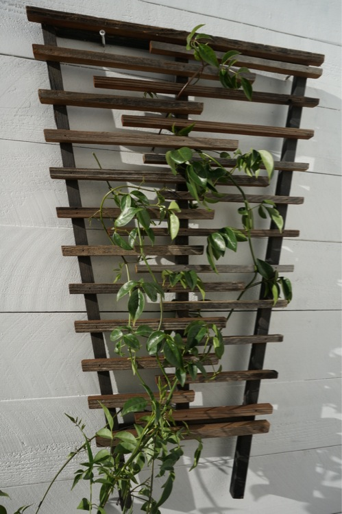 rustic trellis - los angeles.jpeg
