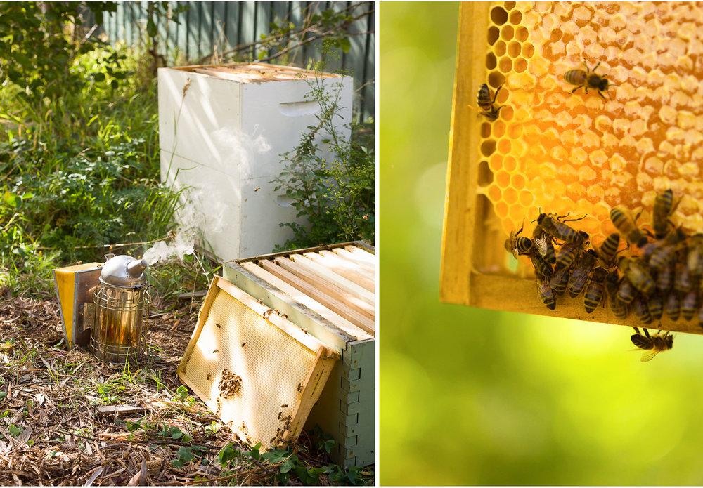 Beekeeper-3.jpg