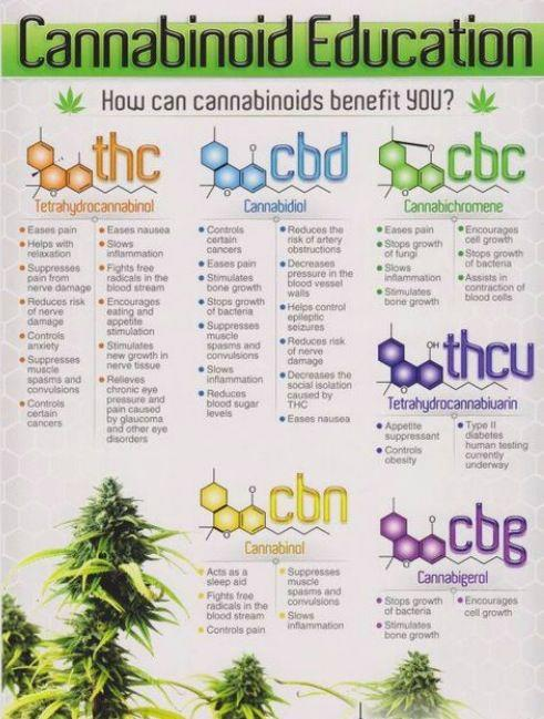 Use this chart to learn about major and minor cannabinoids.