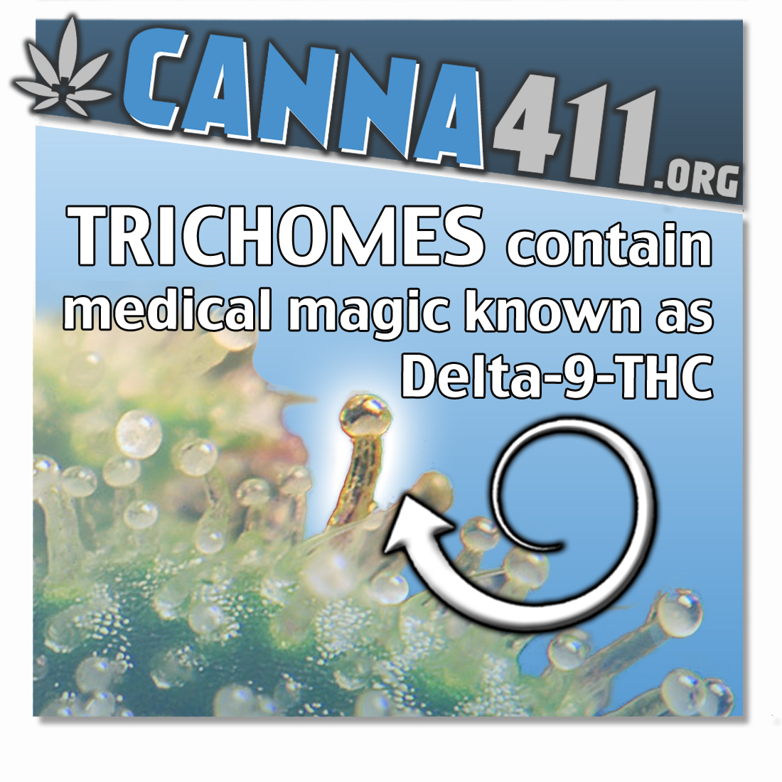 Trichomes Are Where Most of the Medicinal Magic Happens!