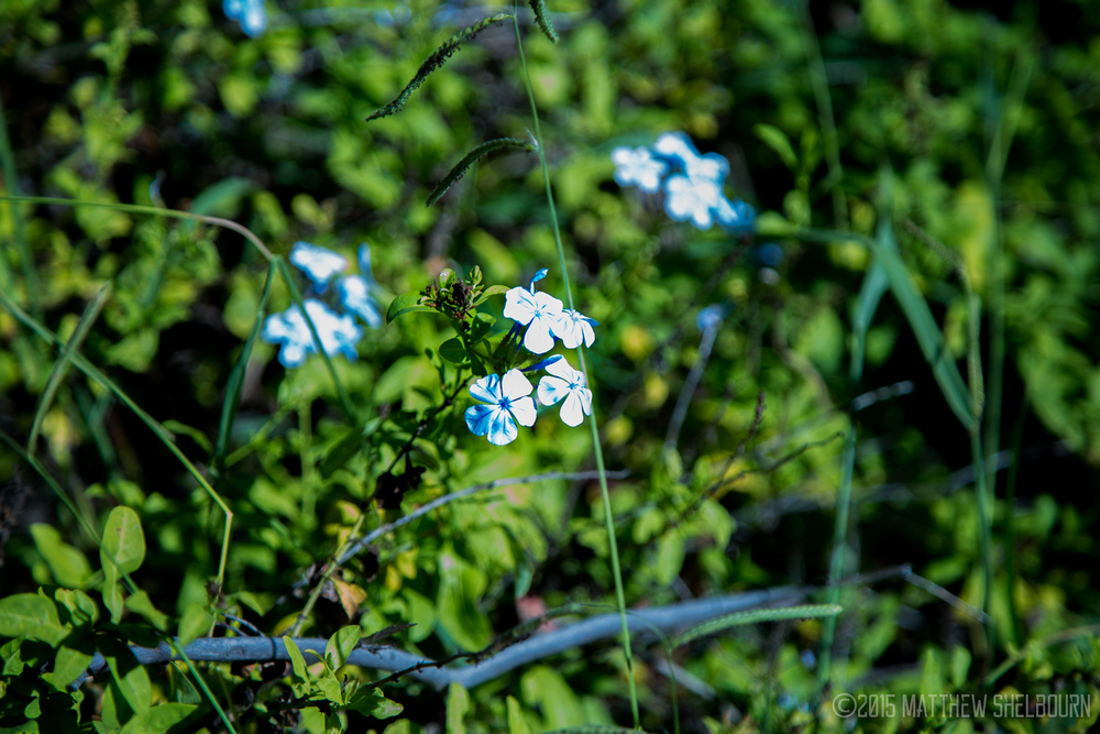 A Lone Cluster of Wildflowers