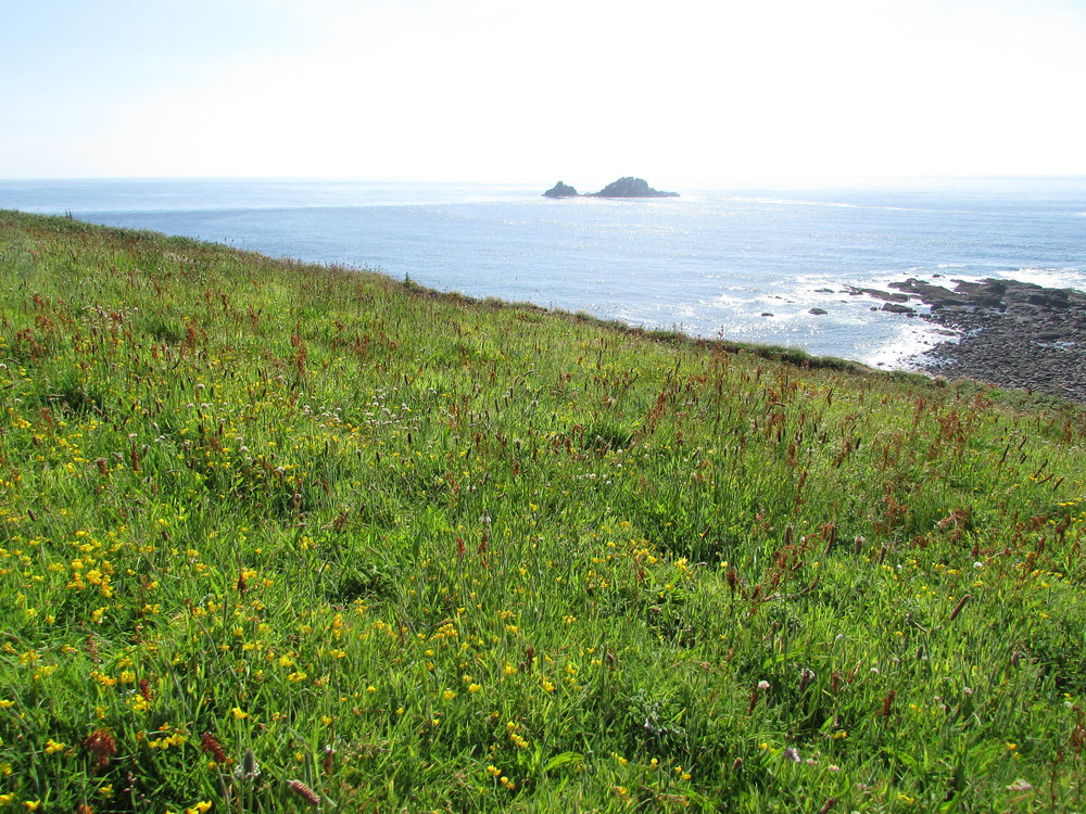 The project officer will deliver 22 hectares of wildflower meadows across the Cornwall AONB similar to this example at Cape Cornwall