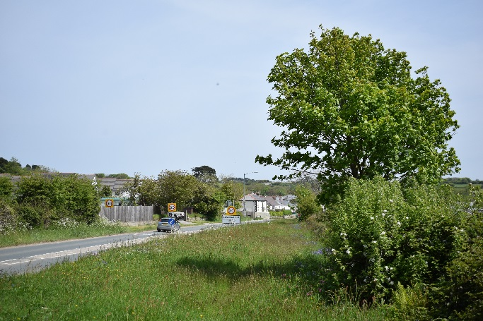 A road verge in spring (left) and in summer after cutting (right), just outside of Blackwater.