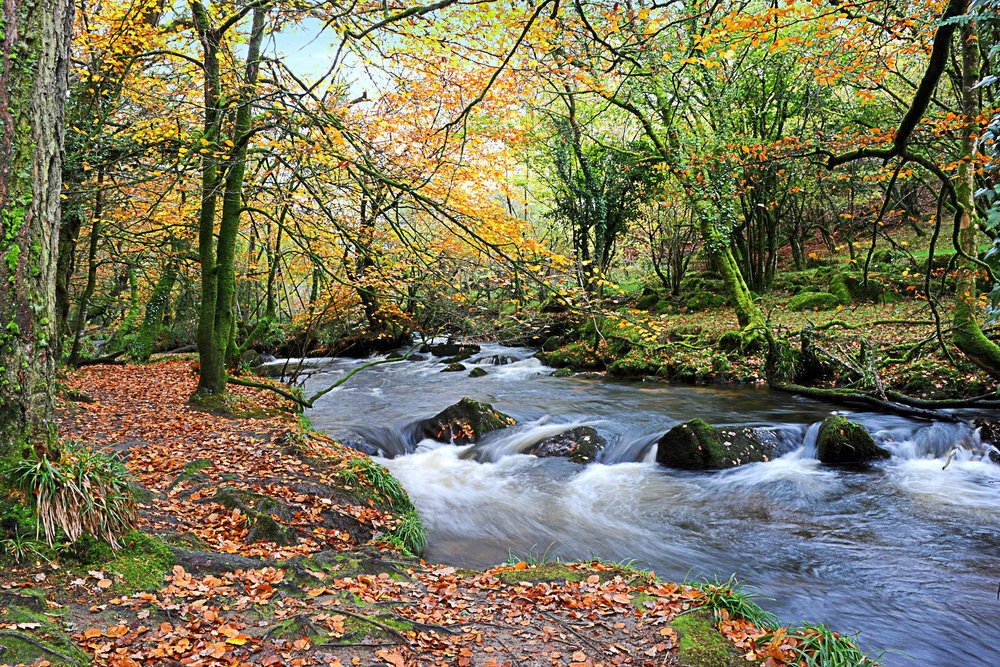 47- Mary Poad -Autumn at Golitha Falls Bodmin Moor.jpg
