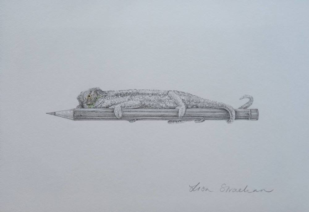 Lisa Strachan    Chameleon II    Pencil on Paper    20.5 x 14 cm   R 2 500
