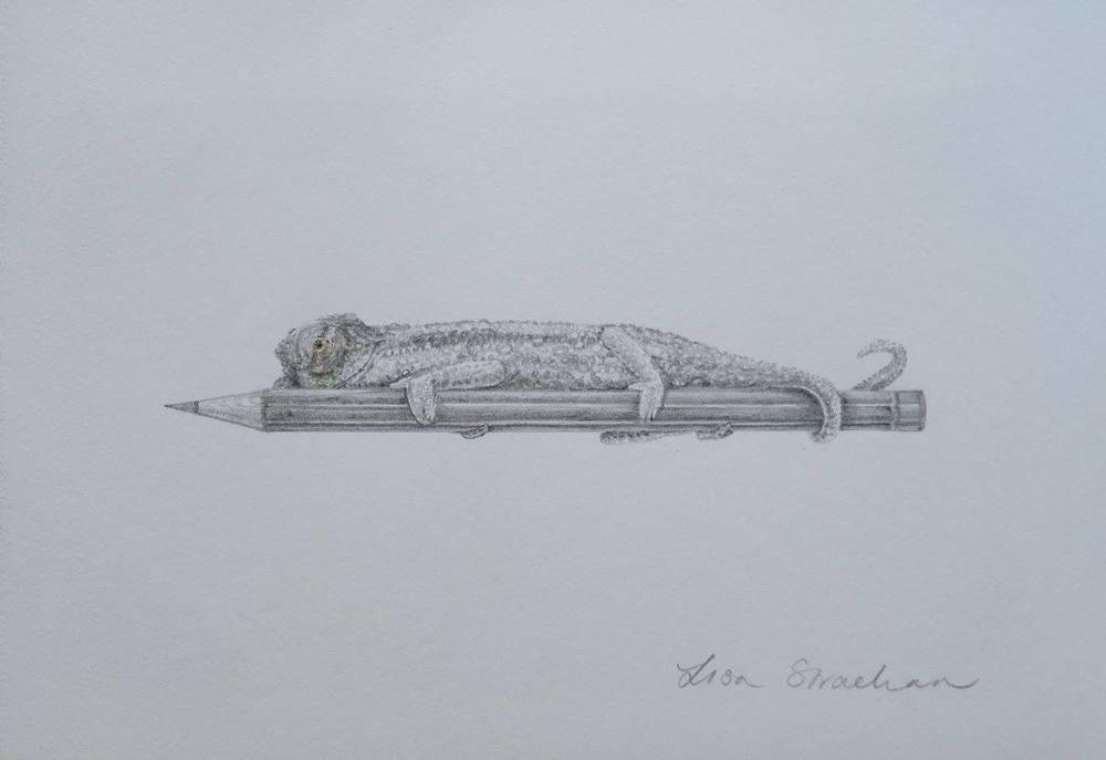 Lisa Strachan    Chameleon II    Pencil on Paper    20.5 x 14 cm   R 2 500