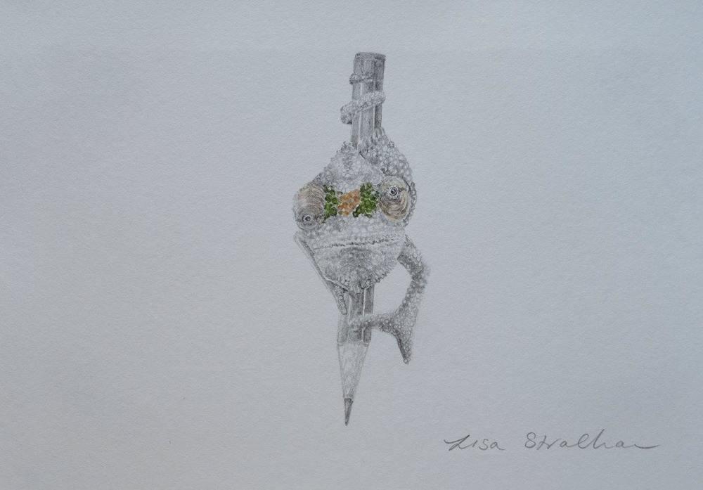 Lisa Strachan    Chameleon III    Pencil on Paper    20.5 x 14 cm   R 2 500