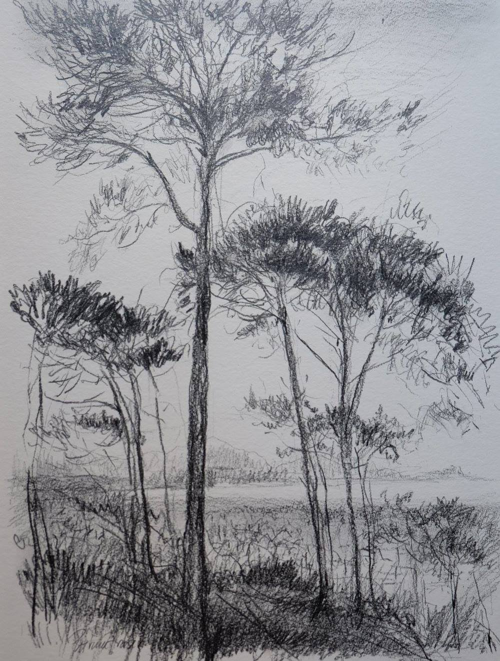 Patricia Fraser    Evening on Winberg Hill     Pencil on Paper    44 x 34 cm  R 2 500 SOLD