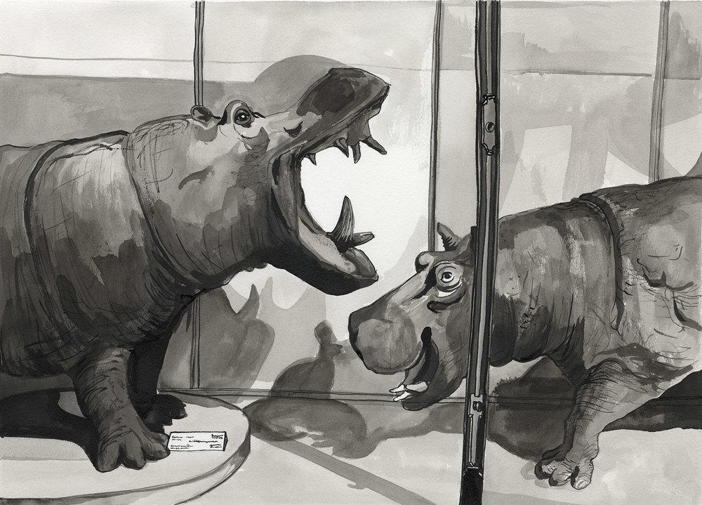 21. Museum Hippos