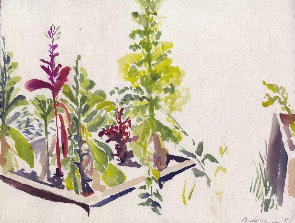 "Alexandra Karamallis ""Lettuce Garden"" Watercolour on Paper 31 x 41cm R6 500"