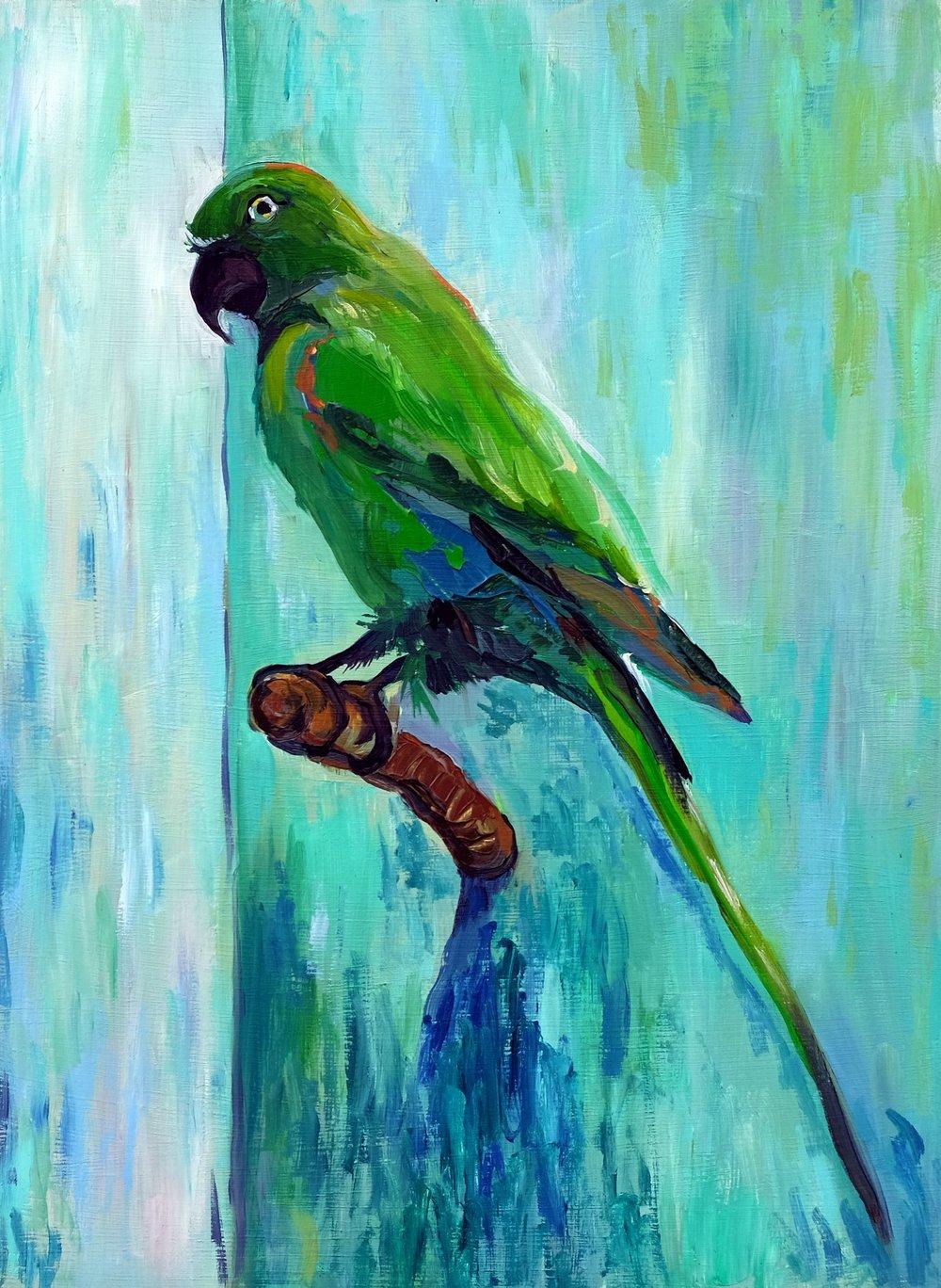 'The Parakeet (Grumpy)'