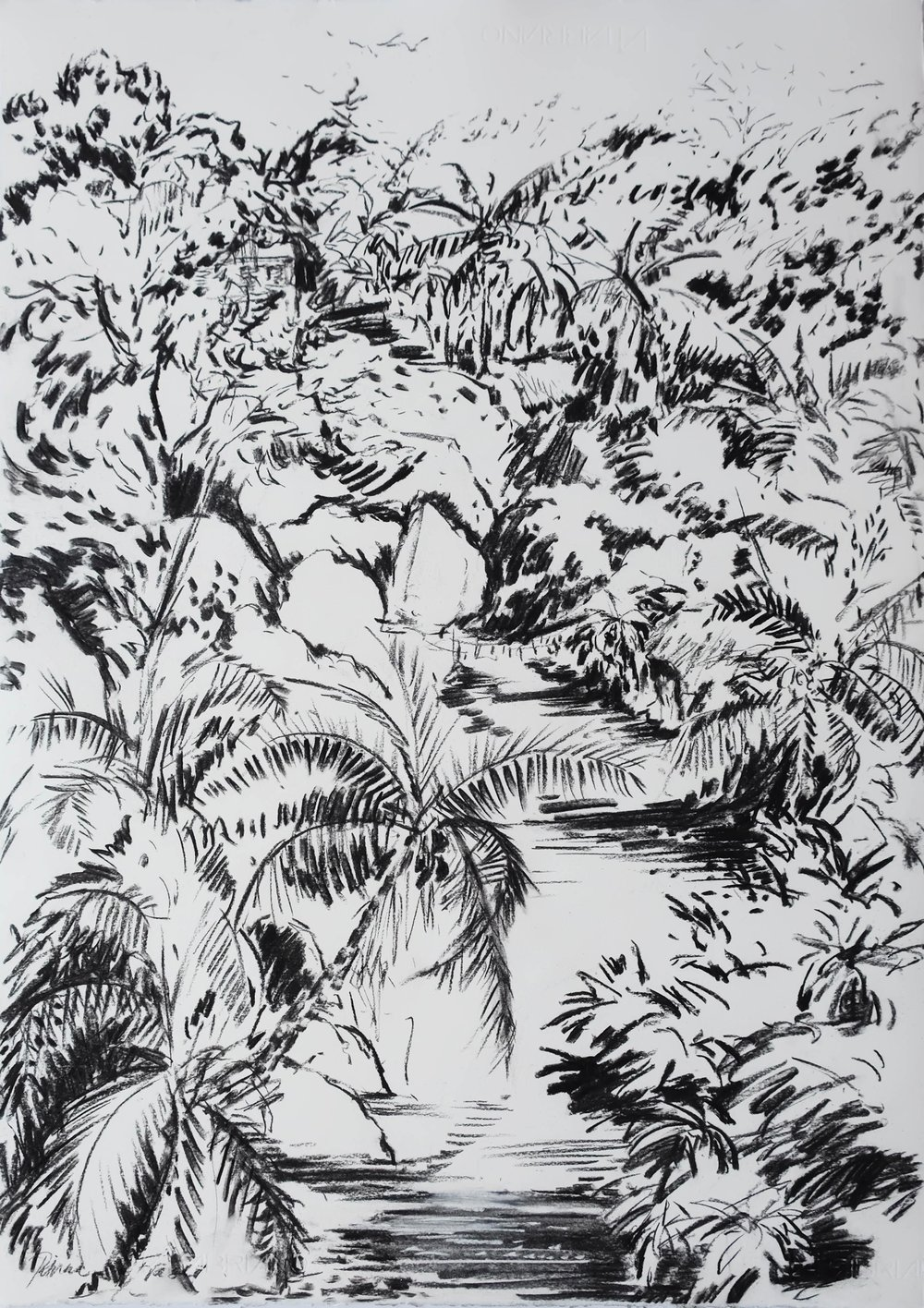 PALM GULLY  71 x 50cm Charcoal on Fabriano R 7 400
