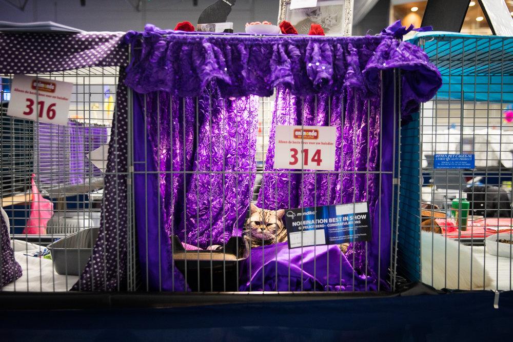 10-Kattenshow hilversum-7922.jpg