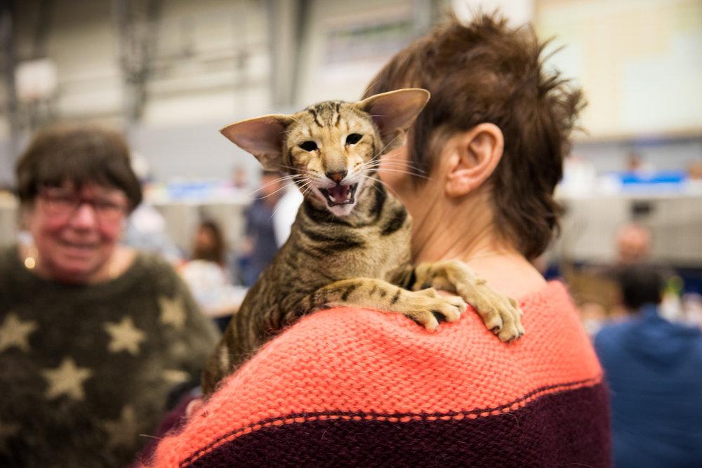 11-Kattenshow hilversum-7936.jpg