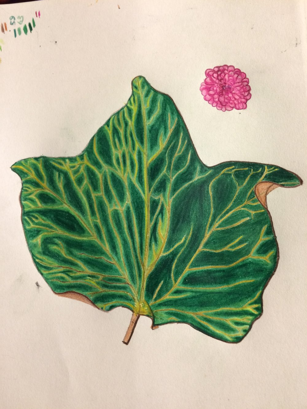 ivy leaf in watercolour pencil
